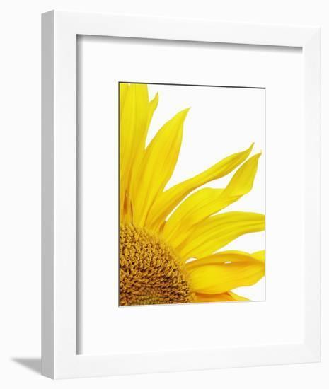 Sunflower-Frank Krahmer-Framed Photographic Print
