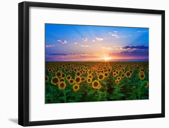 Sunflower-Hansrico Photography-Framed Photographic Print
