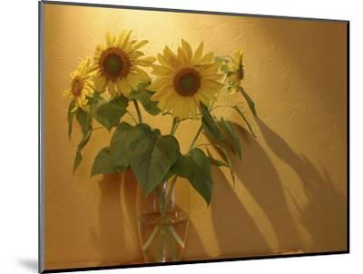 Sunflowers-Anna Miller-Mounted Photographic Print