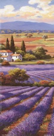 Fields Of Lavender II