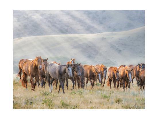 Sunkissed Horses III-PHBurchett-Art Print