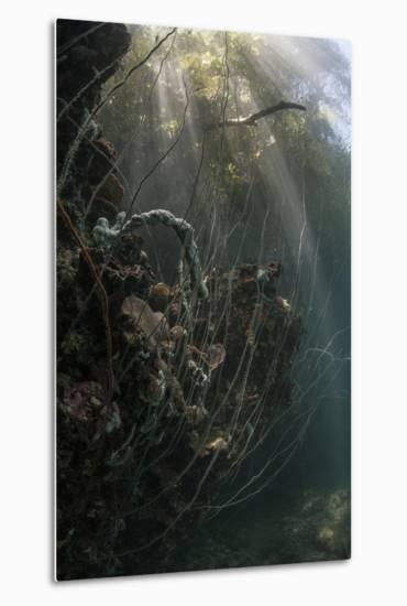 Sunlight Descends Underwater and over a Set of Whip Corals-Stocktrek Images-Metal Print