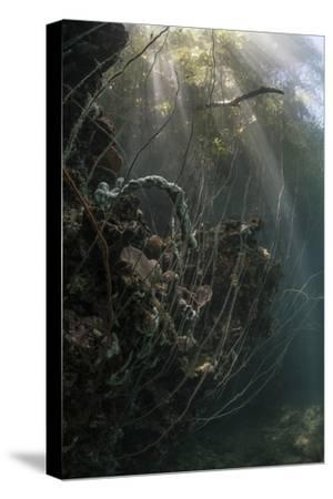 Sunlight Descends Underwater and over a Set of Whip Corals-Stocktrek Images-Stretched Canvas Print