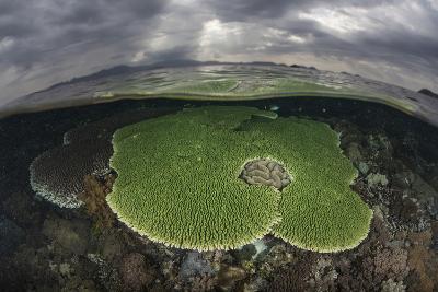 Sunlight Falls on a Beautiful Reef in Komodo National Park-Stocktrek Images-Photographic Print