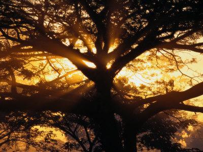 https://imgc.artprintimages.com/img/print/sunlight-filters-through-the-branches-of-a-large-tree_u-l-p3jp700.jpg?p=0