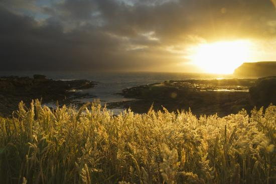 Sunlight Glowing at Sunset and Illuminating the Tall Grass at the Water's Edge-Design Pics Inc-Photographic Print
