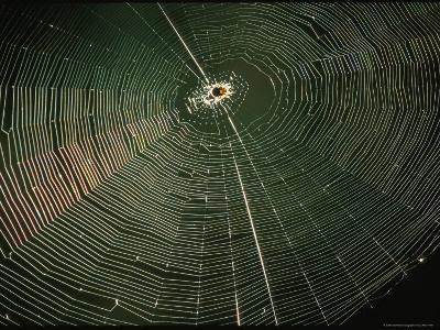 Sunlight Illuminates a Spider Web-Joel Sartore-Photographic Print
