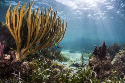 https://imgc.artprintimages.com/img/print/sunlight-illuminates-soft-and-hard-corals-and-blue-and-clear-waters-cuba_u-l-q13c8610.jpg?p=0