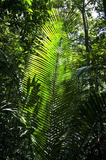 Sunlight Passing Through the Tree Canopy Backlights the Frond of a Palm-Jason Edwards-Photographic Print