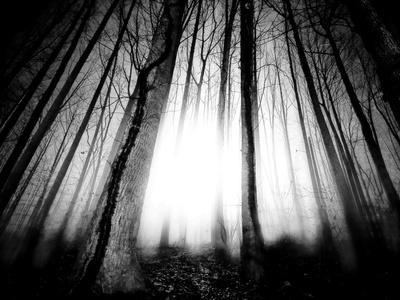 https://imgc.artprintimages.com/img/print/sunlight-shining-through-dense-forest_u-l-pz0utg0.jpg?p=0