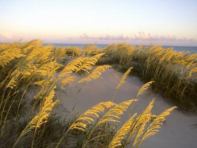 Sunlight Strikes Sea Oats on Dunes Near the Atlantic Ocean-Skip Brown-Photographic Print