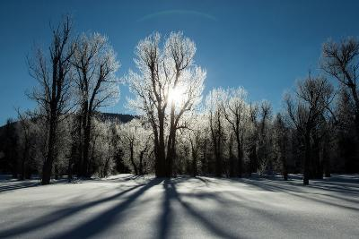 Sunlight Through Ice-Covered Trees in a Snowy Landscape. a Halo over the Sun-Robbie George-Photographic Print