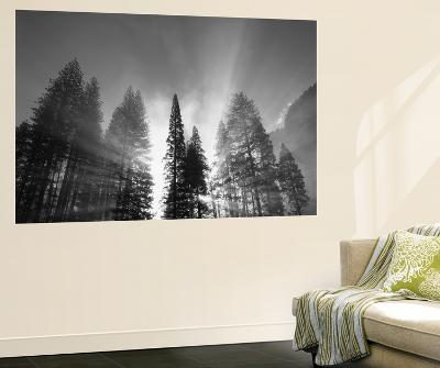 Sunlight Through Pine Forest in Yosemite Valley, Yosemite National Park, California, USA-Adam Jones-Giant Art Print