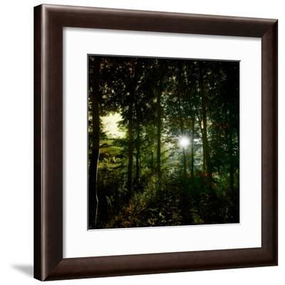 Sunlight Through the Trees-Clive Nolan-Framed Photographic Print