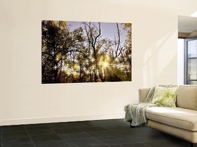 Sunlight Through Trees-Ray Laskowitz-Wall Mural