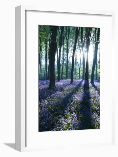 Sunlight Through Treetrunks in Bluebell Woods, Micheldever, Hampshire, England-David Clapp-Framed Photographic Print