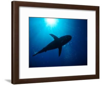 Sunlight Through Water Silhouettes a Passing Shark-Wolcott Henry-Framed Photographic Print