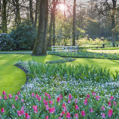 Sunlit Woodland Garden with Tulips-Anna Miller-Photographic Print