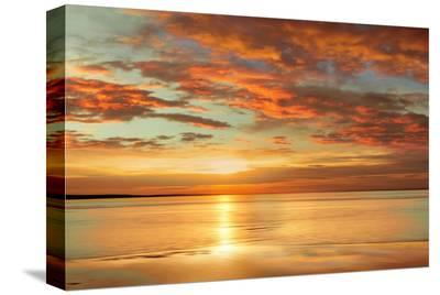 Sunlit-John Seba-Stretched Canvas Print