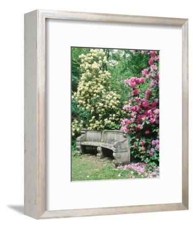 """Curved Stone Bench & Rhododendron Hybrid """"Pink Pearl"""" & """"Dairymaid"""""""