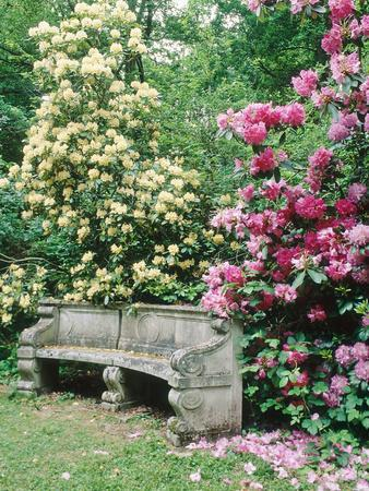 "Curved Stone Bench & Rhododendron Hybrid ""Pink Pearl"" & ""Dairymaid"""