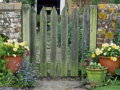 Farmhouse Gate with Terracotta Pots of Viola and Primula Auricula