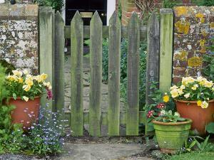 Farmhouse Gate with Terracotta Pots of Viola and Primula Auricula by Sunniva Harte