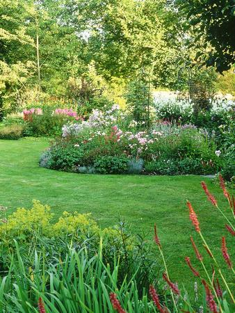 Island Beds Planted with Lychnis, Rosa, Caltha Palustris (Kingcups), Iris & Polygonium