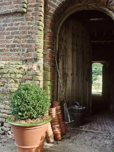 View Through Barn Doorway Buxus in Container Small Pots, Rake by Sunniva Harte