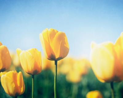Sunny Blooms III-Elizabeth Urquhart-Photo