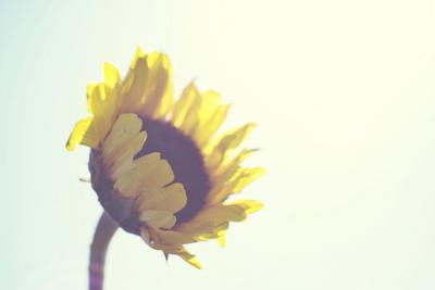 https://imgc.artprintimages.com/img/print/sunny-day_u-l-q1ail560.jpg?p=0