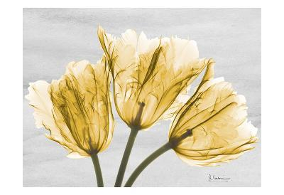 Sunny Trio Tulips-Albert Koetsier-Art Print