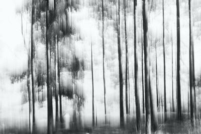 https://imgc.artprintimages.com/img/print/sunny-winter-day_u-l-q1gvwcd0.jpg?p=0