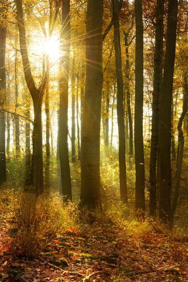 Sunrays and Morning Fog, Deciduous Forest in Autumn, Ziegelroda Forest, Saxony-Anhalt, Germany-Andreas Vitting-Photographic Print