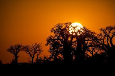 Sunrise at Baines Baobabs, Nxai Pan National Park, Botswana-Paul Souders-Photographic Print