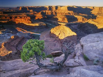 Sunrise at Dead Horse Point with Juniper, Overlooking Canyonlands National Park-Keith Ladzinski-Photographic Print