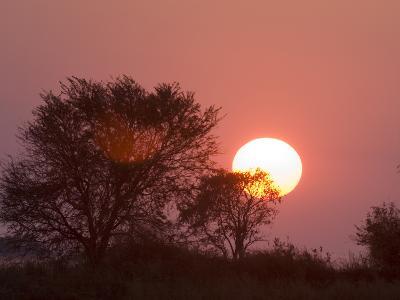 Sunrise, Busanga Plains, Kafue National Park, Zambia, Africa-Sergio Pitamitz-Photographic Print