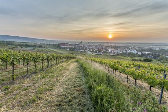Sunrise, Clouds, Town, Vineyard, the Horizon-Jurgen Ulmer-Photographic Print