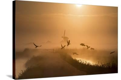 Sunrise Flight-Harm Klaverdijk-Stretched Canvas Print