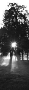 Sunrise, Fog, Woodford Co, Kentucky, USA