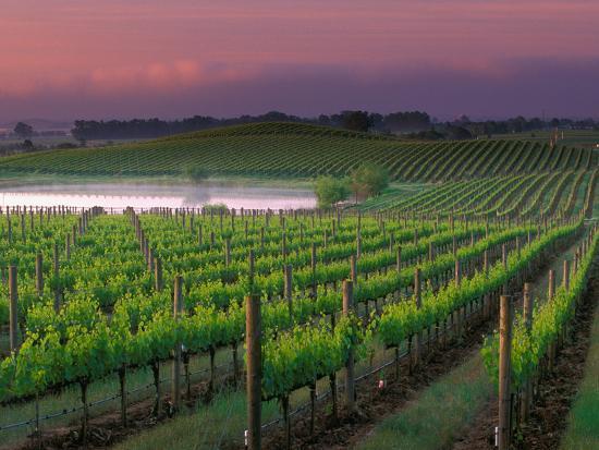 Sunrise in Distant Fog, Carnaros, Napa Valley, California, USA-Janis Miglavs-Photographic Print