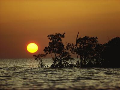 Sunrise in Everglades National Park, Florida-James P^ Blair-Photographic Print