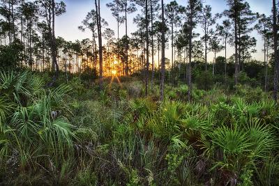 Sunrise in Mahogany Hammock-Terry Eggers-Photographic Print