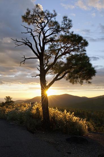 Sunrise in the Sunset Crater Volcano National Monument-Scott Warren-Photographic Print
