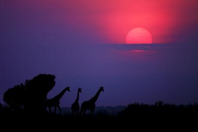 Sunrise in Uganda-Nicolás Merino-Photographic Print