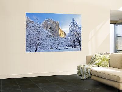 Sunrise Light Hits El Capitan Through Snowy Trees in Yosemite National Park, California, USA-Chuck Haney-Wall Mural