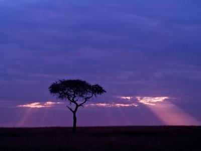 Sunrise, Maasai Mara, Kenya-Joe Restuccia III-Photographic Print