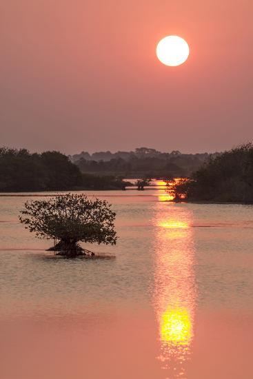 Sunrise, Mangroves and Water, Merritt Island Nwr, Florida-Rob Sheppard-Photographic Print
