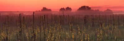 Sunrise on the Field in Summer-Anton Petrus-Photographic Print