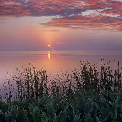 Sunrise over Indian River Marsh Near Titusville, Florida, Usa-Tim Fitzharris-Photographic Print